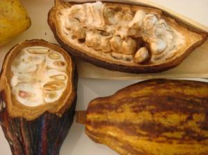 Artisan du Chocolat Cacao Pods